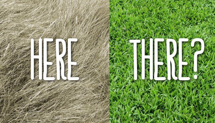 Part I: Is the Grass Really Greener?